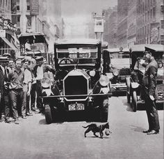 Copper stopping traffic in New York City so that mama cat can cross the street with her kitten… most sources date this one at July 1925  _______