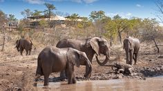 The Elephant Camp is an exclusive, luxury tented safari camp, located on the Wild Horizons Wildlife sanctuary only from Victoria Falls Best Tourist Destinations, Elephant Camp, Largest Waterfall, Pool Picture, Out Of Africa, Group Tours, Africa Travel, Trip Advisor, Safari