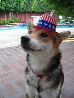 Proud to be an #American Pup!