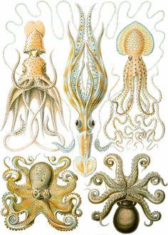 「鸚鵡螺」的圖片搜尋結果