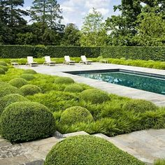 plant combo with topiary