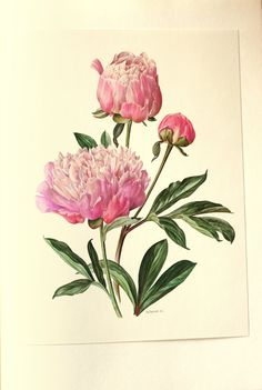 ● 1972 Vintage peony poster in delicate shades of pink. my favorite flowers ! This pink peony print comes from an out-of-print French Swiss Art Floral, Vintage Floral, Decoupage, Botanical Flowers, Botanical Prints, Pink Peonies, Pink Flowers, Zealand Tattoo, Chinese Flowers