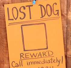 Tips for an Effective 'Lost Dog' Poster | The Dogington Post