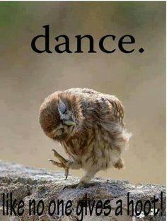 Haha! Dance + owls = win #dance