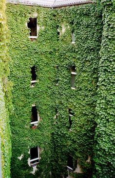 Green Living Walls/Vertical Garden