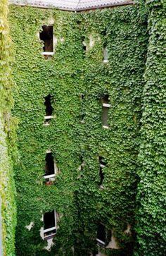 Green Living Walls/Vertical Garden