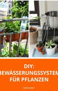 Pflanzen Bewässern Urlaub : automatische bew sserung um die pflanzen ber den urlaub am leben zu erhalten 50 shades of ~ Watch28wear.com Haus und Dekorationen