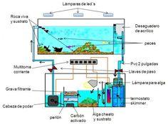 Saltwater Aquarium Setup, Aquarium Sump, Wall Aquarium, Big Aquarium, Coral Reef Aquarium, Aquarium Filter, Aquarium Design, Saltwater Tank, Marine Aquarium