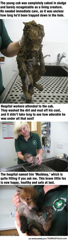 They Found This Cute Little Cub Caked In The Mud