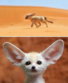 9 tra i più adorabili cuccioli di animali selvatici esistenti al mondo