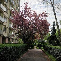 Ružinov farebný #ruzinov #bratislava  #springtime
