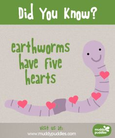Earthworms have 5 hearts!