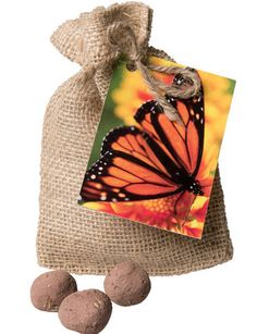 Create a Monarch Butterfly Garden with this Gift Set of Milkweed Seed Balls