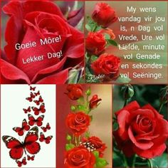 n Dag vol vrede Good Morning Texts, Good Morning Wishes, Good Morning Quotes, Cute Birthday Wishes, Happy Birthday, Lekker Dag, Afrikaanse Quotes, Goeie More, Morning Greetings Quotes