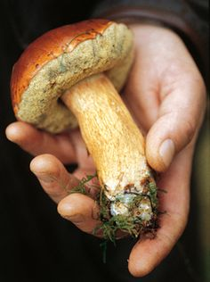 Grzyby, grzybobranie...mushrooms, mushroom picking