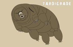 Tardigrades toughest creature alive