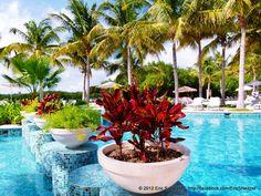 Pool Fauna  @Hacienda Tres Ríos Resort, Spa and Nature Park