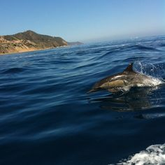Come join us on Dolphin Quest.  www.visitcatalinaisland.com