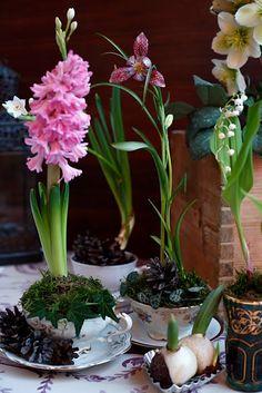 bulbs in teacups, romantic easter centerpiece