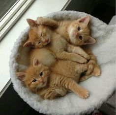 "love this orange kitties ""starter kit""...just add love, food, and lots of fun!!"