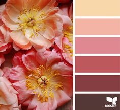 Ten gorgeous pieces of floral color palette inspiration designed by Jessica Colaluca, the power house behind Design Seeds. Colour Pallette, Colour Schemes, Color Combos, Color Patterns, Design Seeds, Pantone, Flora Design, Color Swatches, Color Of Life