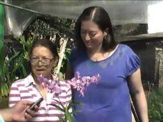 Produção de orquídeas - Orquidário doméstico - TV Hoje - Rubens Rocha