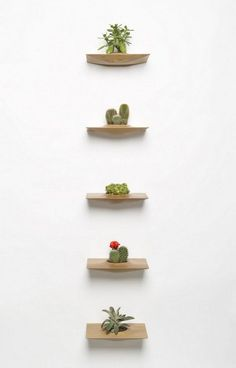Wall-plants