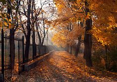 Crisp Autumn Air