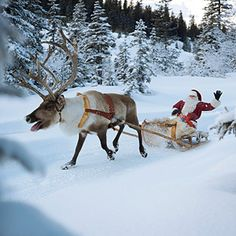 A real Reindeer (and Santa too).