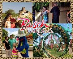 Busch Gardens Tampa Bay is the ultimate family adventure park, featuring an unparalleled combination of exotic animal encounters, world-class thrill rides and live entertainment.