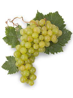 Uva #Moscatel de #Alejandría| Variedades de #Uvas para Vinos de España
