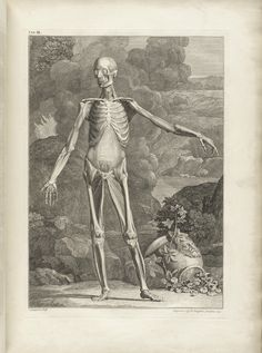 Table 3a of Bernhard Siegfried Albinus' Tabulae sceleti et musculorum corporis humani, 1749, featuring a full length frontal view of a flayed corpse in a landscape with its left arm is extended.