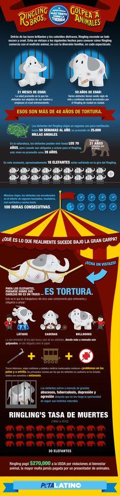 Echa un vistazo a esta infografía para conocer cómo el circo Ringling Bros. vende maltrato animal y no diversión para la familia en cada show.