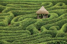 Reminds me of The Labyrinth (you know without David Bowie in pants so tight they could give anyone nightmares - great movie, though) Laurel maze at Glendurgan Garden, Cornwall, England National Geographic, Amazing Maze, Awesome, Cornwall England, England Uk, Parcs, Photos Du, Hedges, Belle Photo