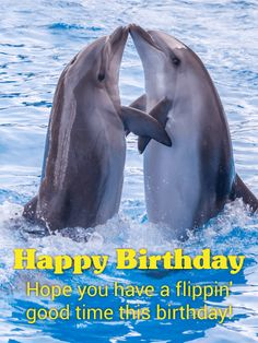 94 Best Animal Birthday Cards Images Anniversary Greeting Cards