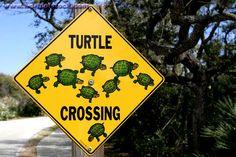 Turtle Crossing! Traffic sign on Sanibel