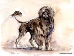 PORTUGUESE WATER DOG FINE ART