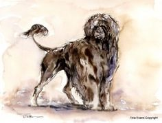 PORTUGUESE WATER DOG FINE ART
