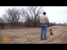 D.T. the Dog Training Series Releases How to Teach Hand Signals/Casting Drills to a Dog - OutdoorHub