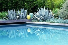 Landscaping around swimming pools calls for non-messy plants (see list), etc. Take care of safety first, then privacy in case you wish to skinny dip!