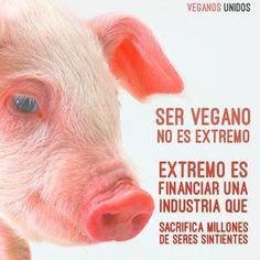 Cocina – Recetas y Consejos Going Vegetarian, Going Vegan, News Memes, Vegan Facts, Vegan News, Vegan Food, Vegan Quotes, Vegan Animals, Vegan Fashion