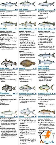 Infografías de peces 46