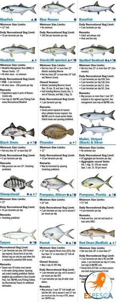 Gulf of Mexico Fish Species….. | Charts, Fishing tips and ...