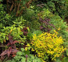 A Garden Full of Variety | Fine Gardening