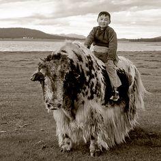 Splendid isolation: the story of the Mongolian yak | Бодиос | Bodios