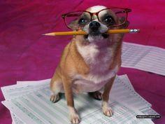 funny-dog-preparing-for-exam