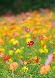 秋 #Osaka #Japan #fall Osaka Japan fall