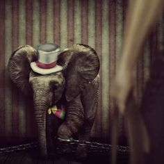 """""""We cannot glimpse the essential life of a caged animal, only the shadow of its former beauty. All Animals Are Equal, Animals And Pets, Zoo Animals, Circus Animal Abuse, Suffering Quotes, The Essential Life, Vegan Quotes, Stop Animal Cruelty, Vegan Animals"""