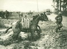 electricsandbox.freeforums.org • View topic - <b>Horses</b> of WWI