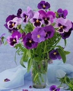 A vase of purple pansies Cut Flowers, Purple Flowers, Fresh Flowers, Spring Flowers, Pretty Flowers, Johnny Jump Up, Sweet Violets, Jolie Fleur, Pansies